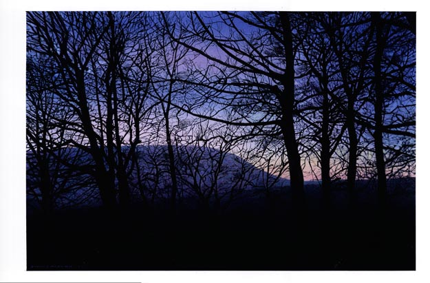 Pendle with Trees